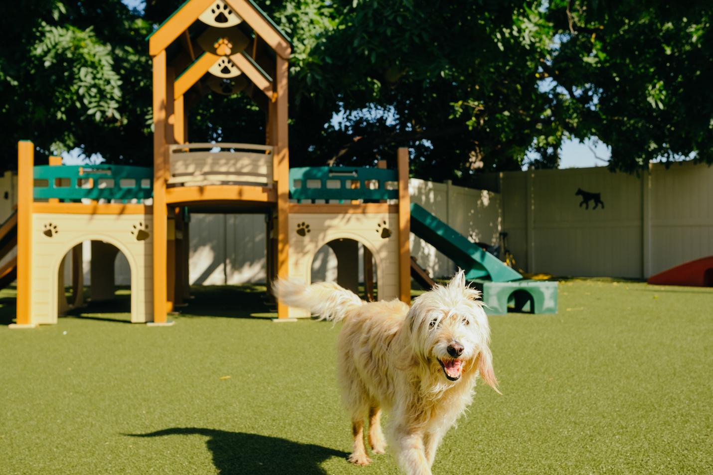 Dogpark 6
