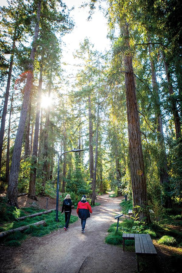 Ucd Arboretum Webres